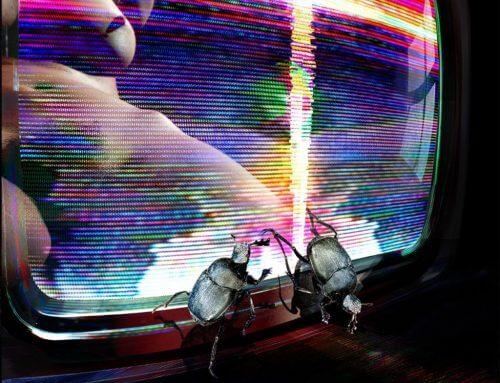 La pasión del escarabajo